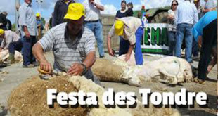 Shearing festival in Es Llombards